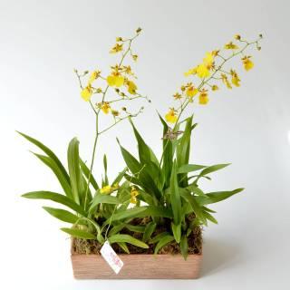 Leveza | Florisbella Floricultura