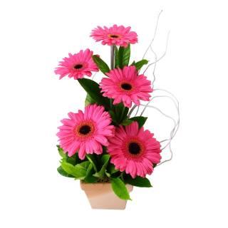 Amor Puro | Florisbella Floricultura