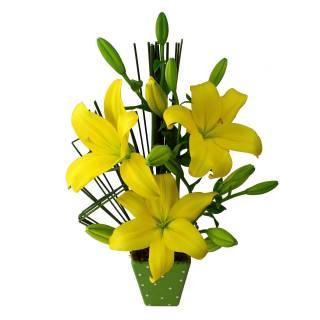 Alegria de te Amar | Florisbella Floricultura