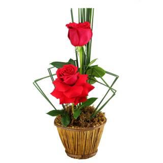 Mimos de Rosa | Florisbella Floricultura