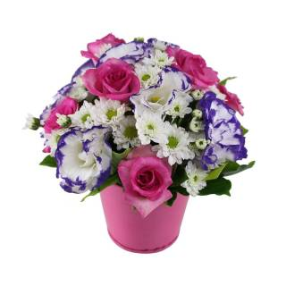 Amoroso | Florisbella Floricultura