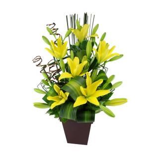 Encanto | Florisbella Floricultura