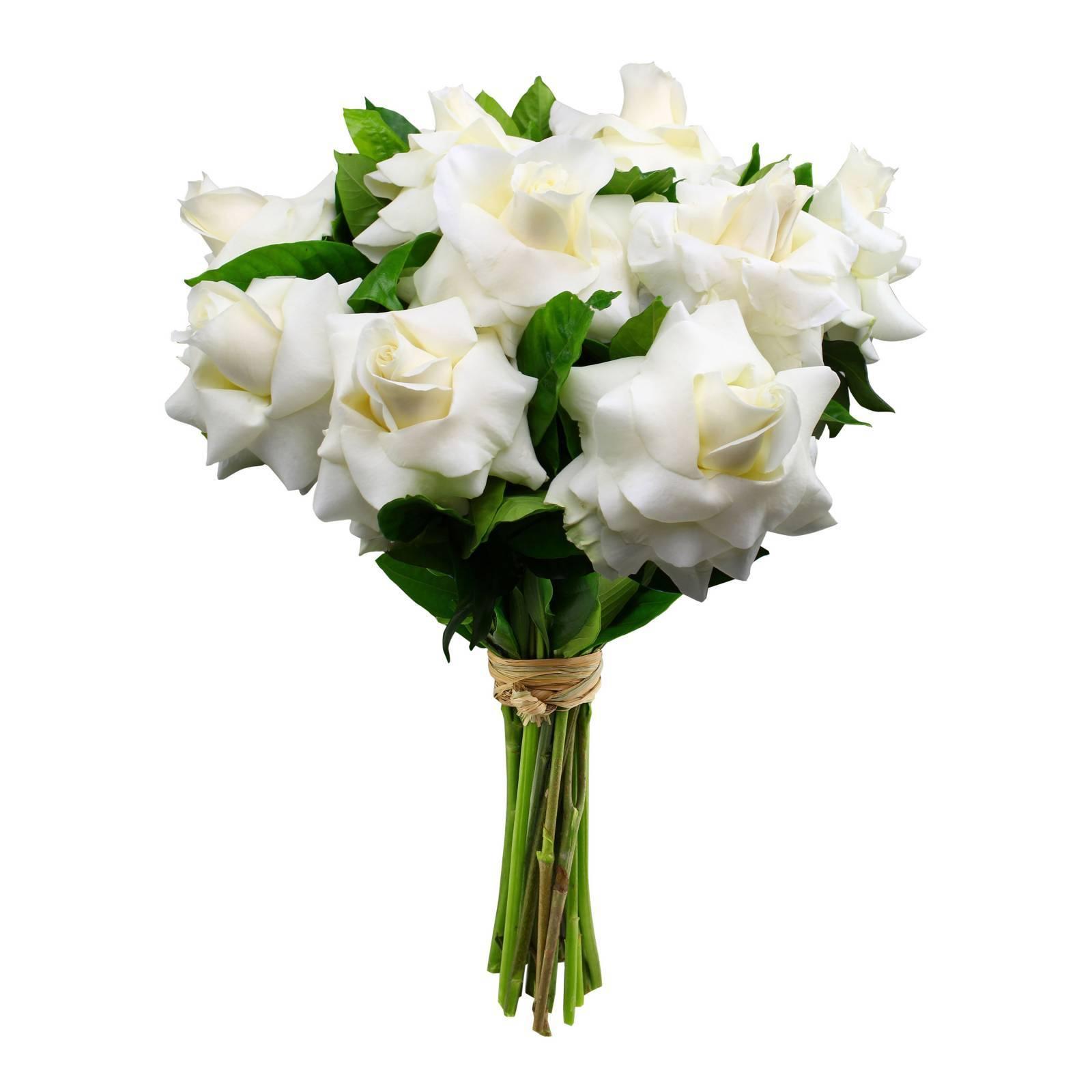 Buquê de Rosas Colombianas Brancas  - Florisbella - Matriz Campinas