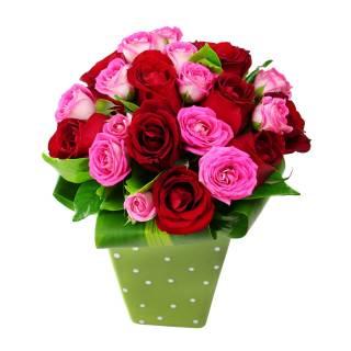 Encantador | Florisbella Floricultura