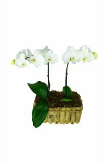 Proteja-me | Florisbella Floricultura