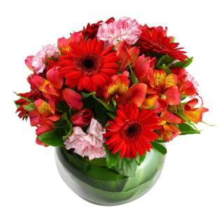 Intenso | Florisbella Floricultura