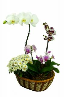 Jardim Feliz | Florisbella Floricultura