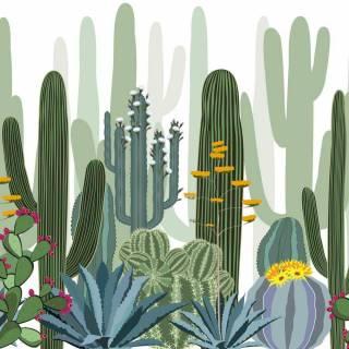 Papel de Parede Cactus | M²