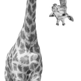Painel Fotográfico Girafa | M²