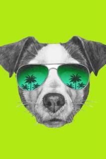 Quadro Cão de Òculos