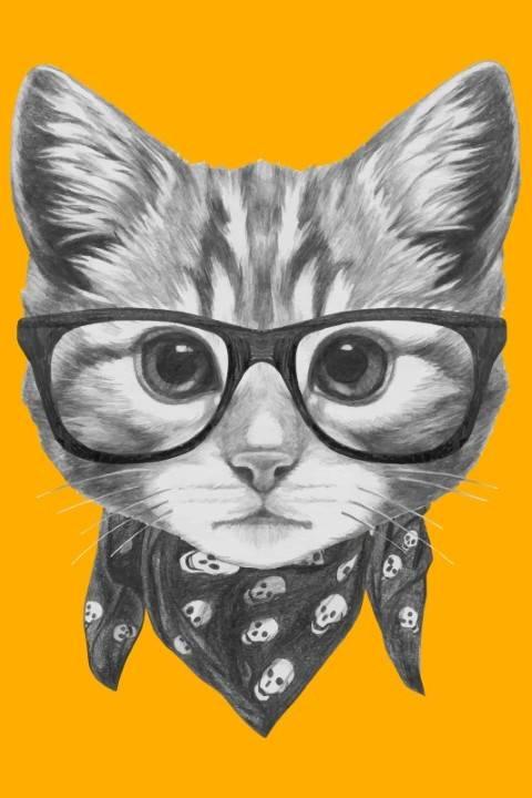 Quadro Gato de Lenço imagem 1