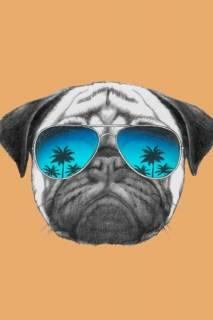 Quadro Cão de Òculos | Redecorei