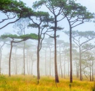Painel Fotográfico Natureza Bosque / m²