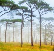 imagem do Painel Fotográfico Natureza Bosque / m²