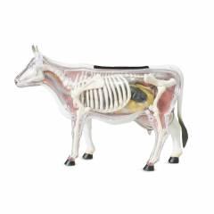 Modelo Anatômico Vaca