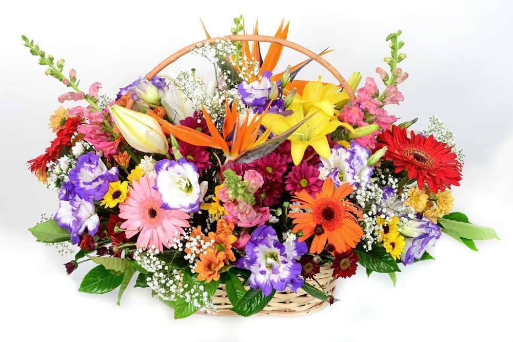 Boas Energias - Floricultura Cambuí
