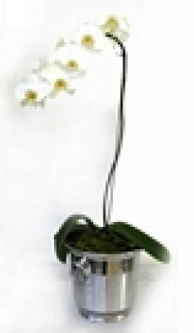 Luxuoso - Floricultura Cambuí