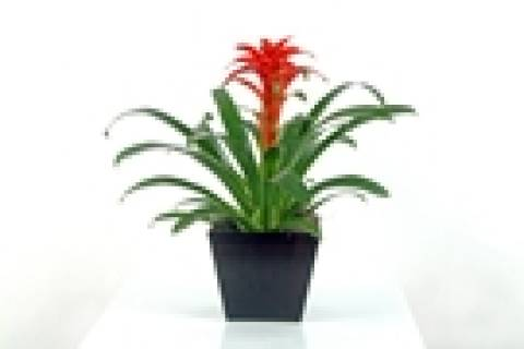 Simplicidade - Floricultura Cambuí