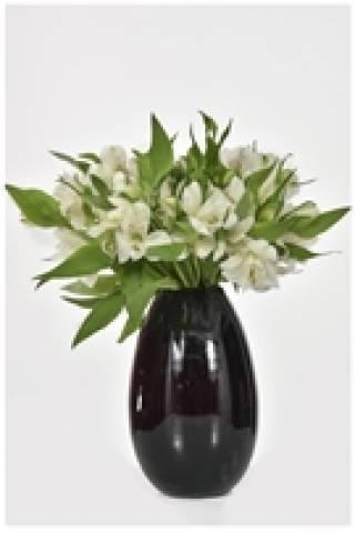 Singelo - Floricultura Cambuí