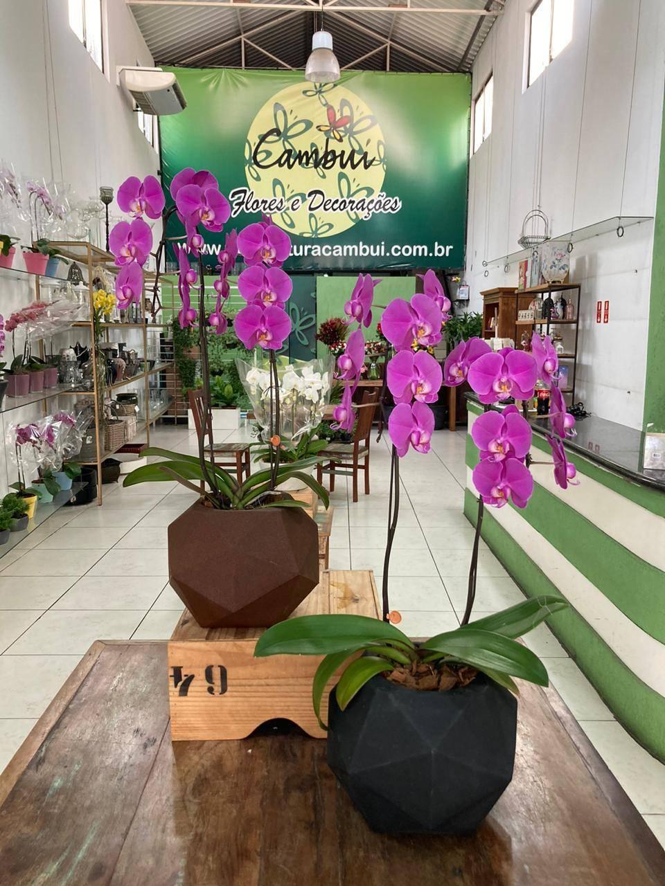 ORQUÍDEA QUARTZO - Floricultura Cambuí